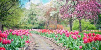 Saiba como planear o seu jardim para obter bons resultados