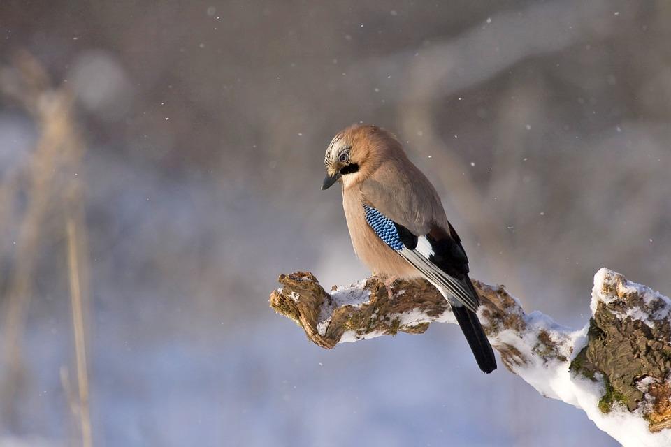 Saiba como cuidar dos pássaros no inverno