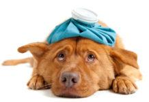 Saiba como identificar os sinais de doença do animal