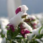 Plantas: manual de sobrevivência ao Inverno