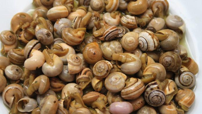 Receita de caracóis à portuguesa