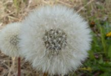 Rinite, sintomas e causas desta doença alergénica sazonal