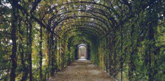 Como usar trepadeiras na decoração de jardins
