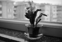 5 dicas de jardinagem para principiantes